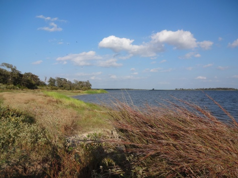 Lake Somerville Birch Creek Unit